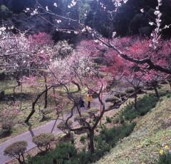 湯田川温泉「梅林公園」