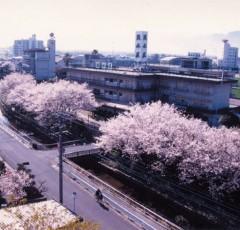 春の吉井温泉街