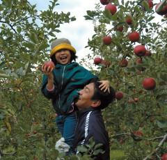 金田一温泉観光リンゴ園の収穫祭は毎年11月上旬に行われる